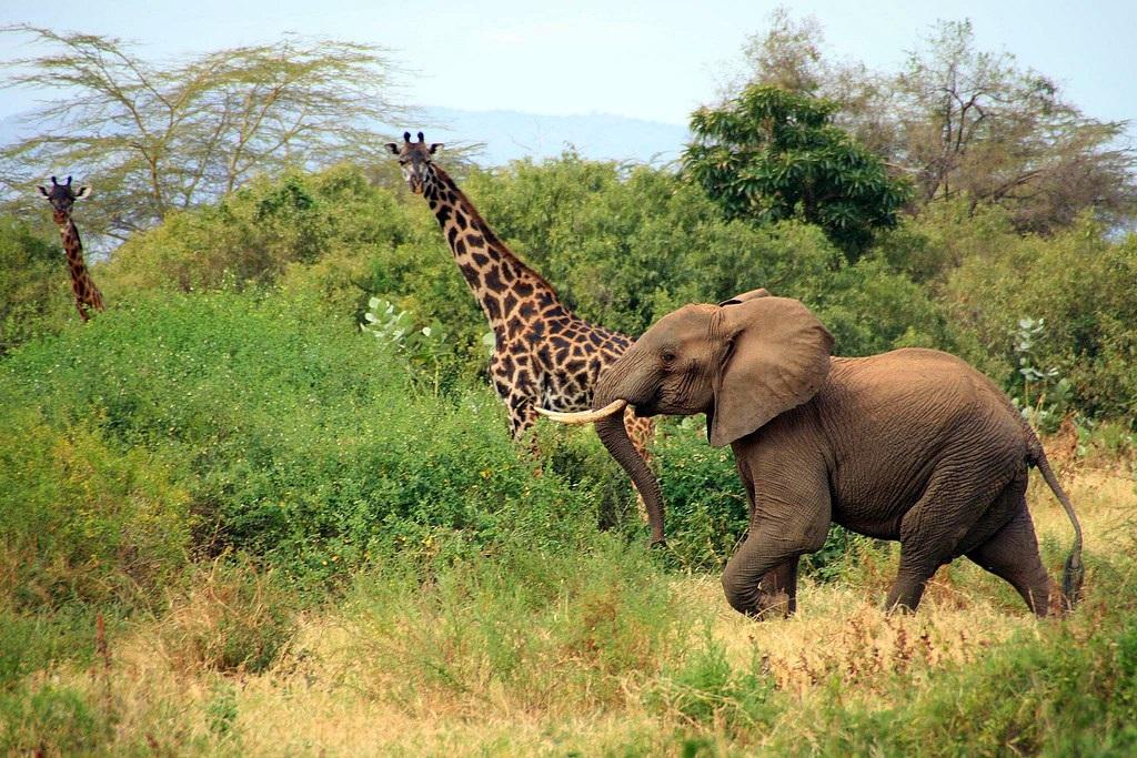Visiter Manyara - Tanzanie