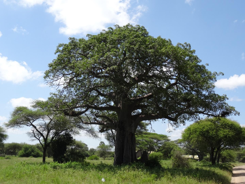 Visiter Tarangire - Tanzanie