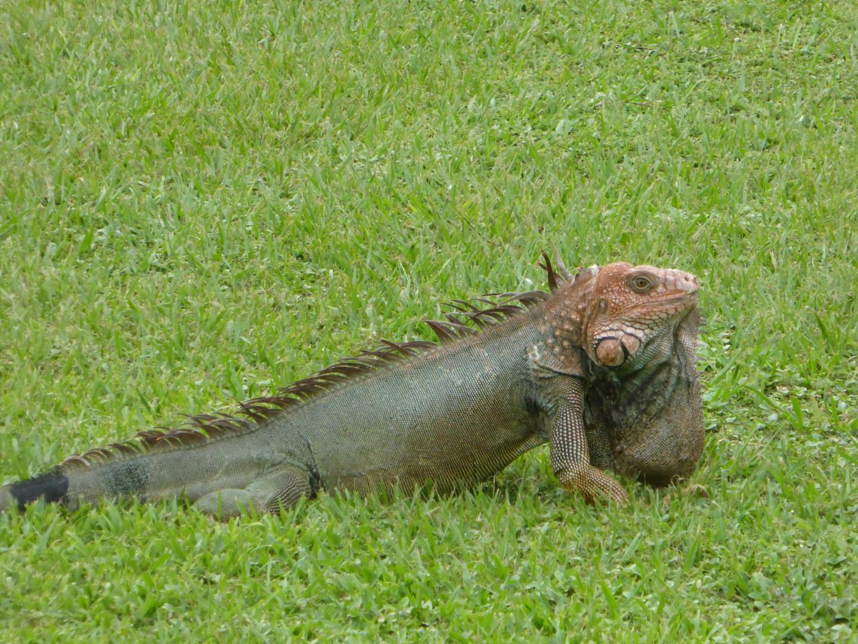 Visiter Rincon de la Vieja - Costa Rica