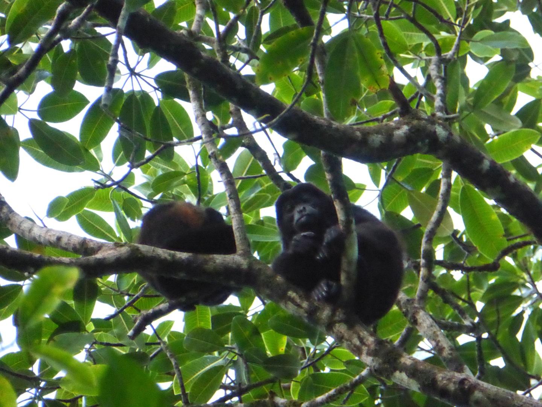 Visiter Tortuguero - Costa Rica
