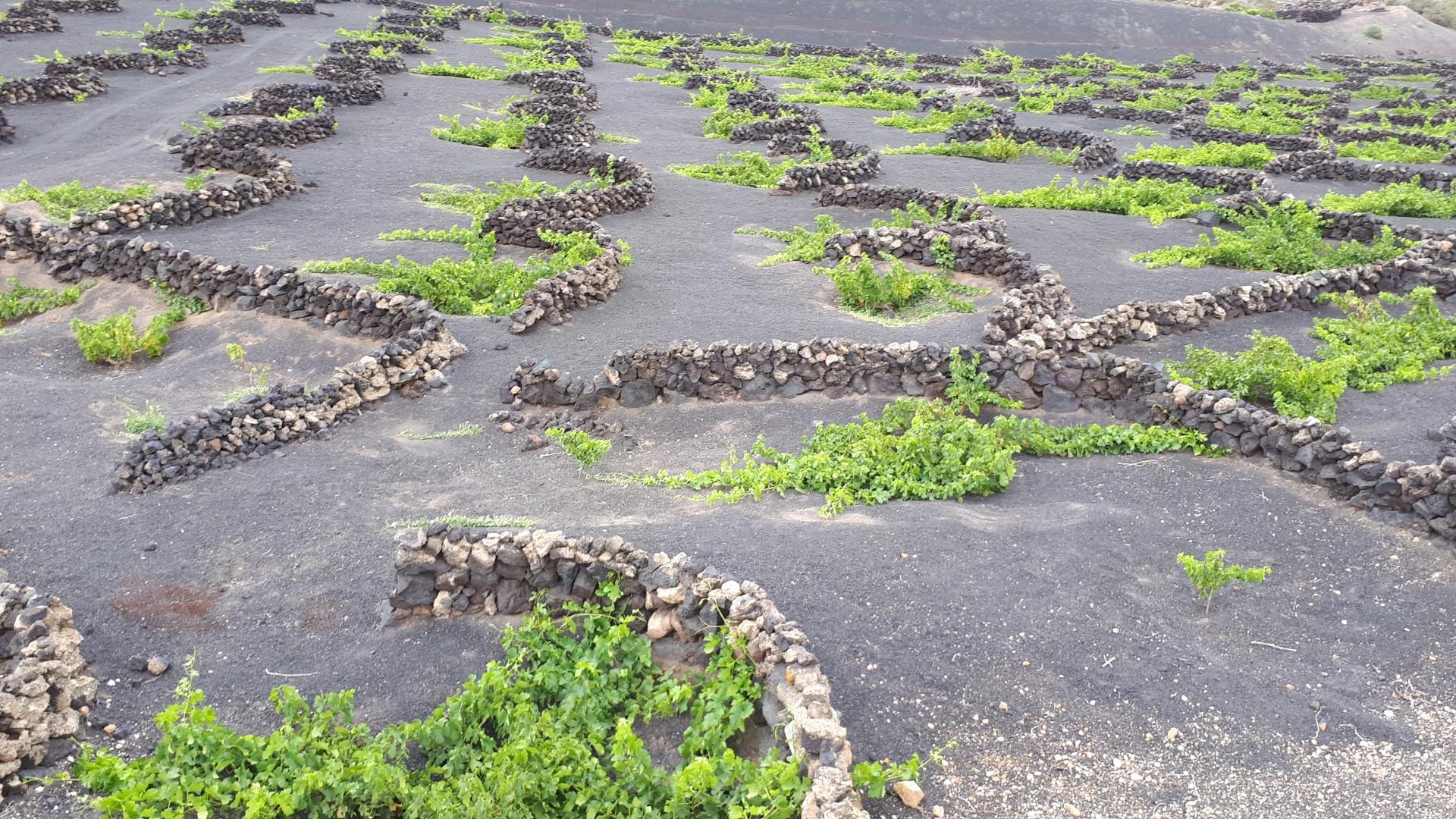 Visiter La route des vins (Lanzarote) - Canaries
