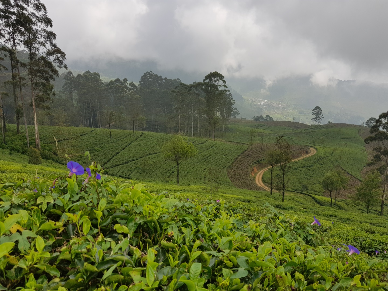 Visiter Bandarawela - Sri Lanka