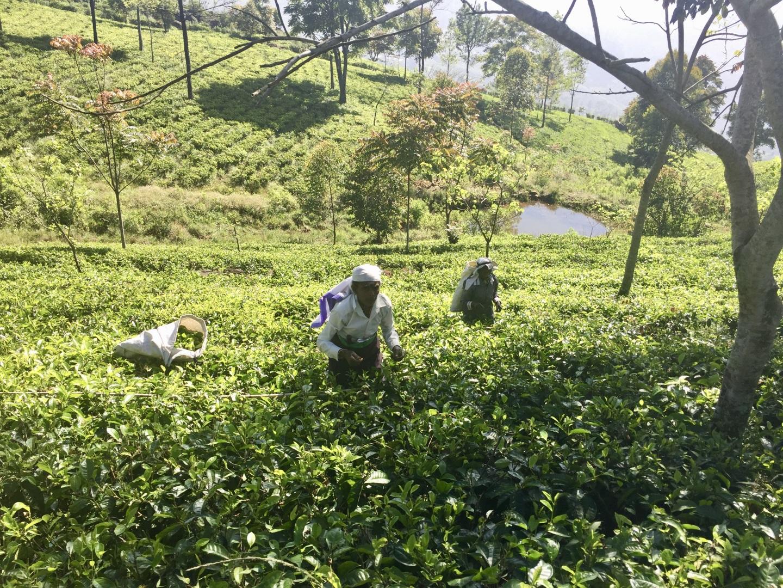Visiter Haputale - Sri Lanka