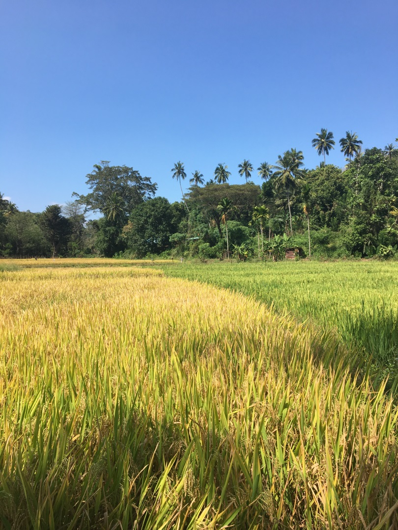 Visiter Mont Knuckles - Sri Lanka