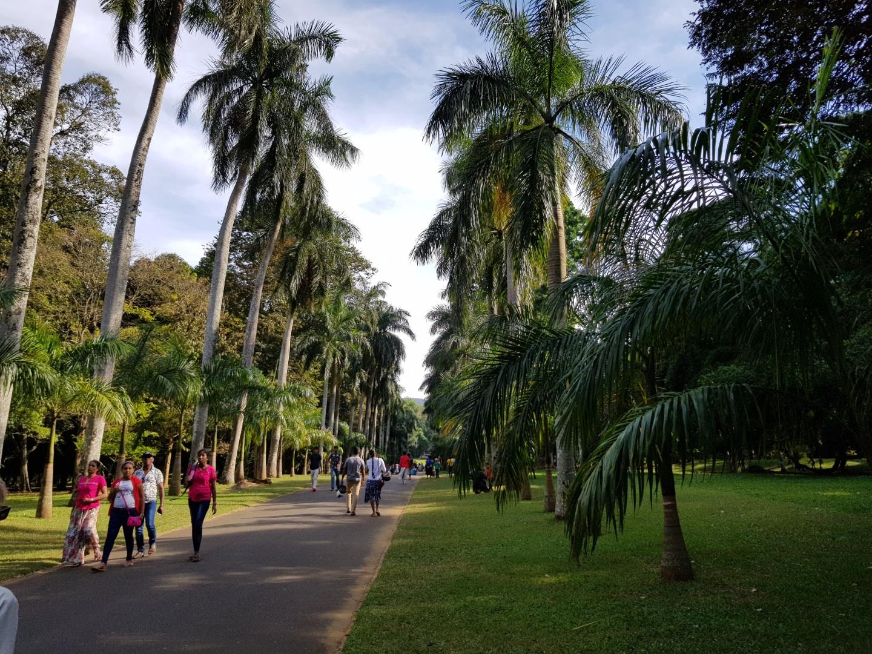 Visiter Peradeniya - Sri Lanka