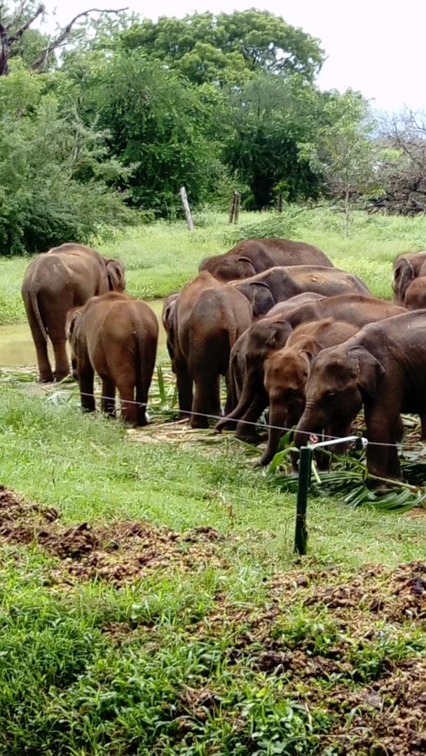 Visiter Le Parc National de Yala - Sri Lanka