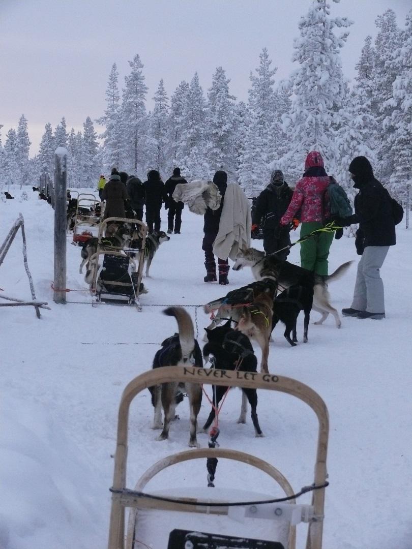 Visiter La Laponie en traîneau à chiens - Laponie