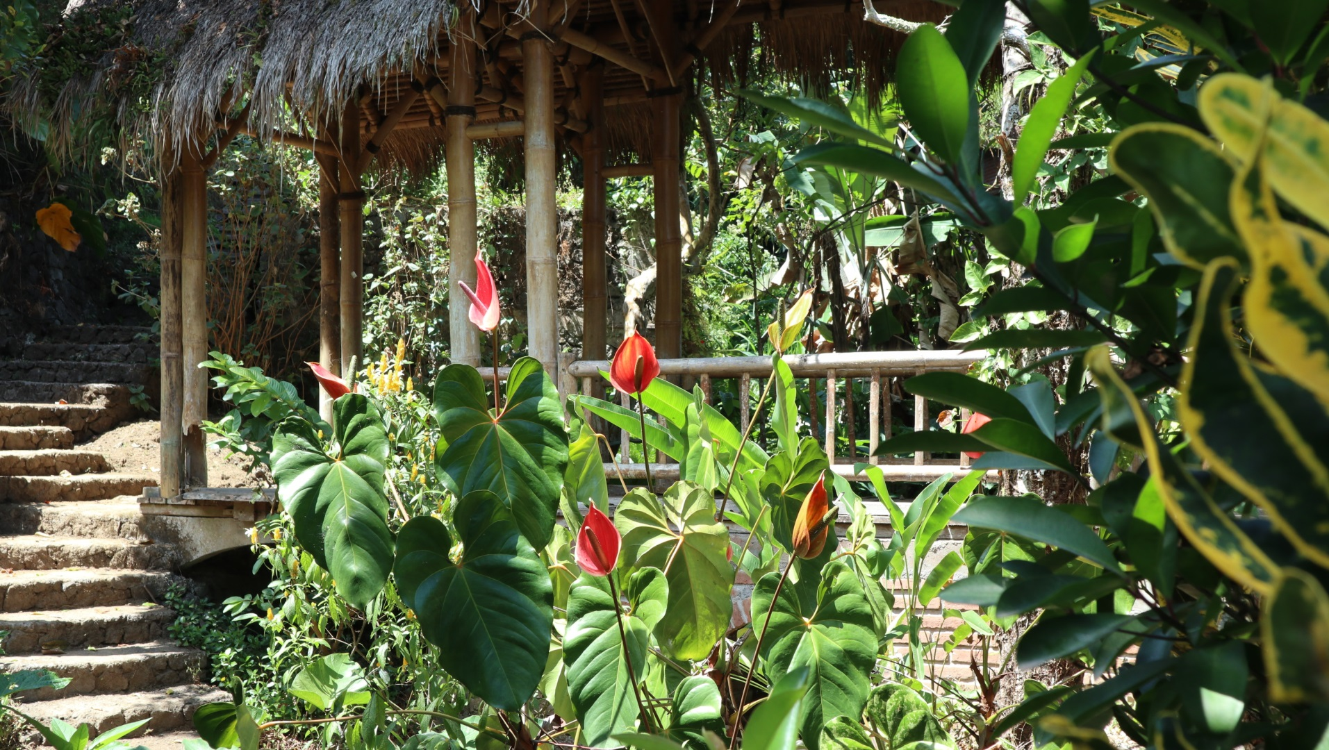 Visiter Lovina - Indonesie