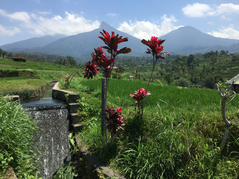 Visiter Ubud - Indonesie