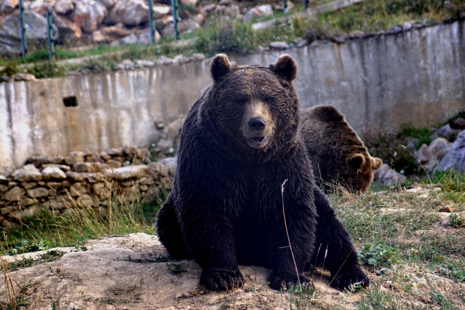 Visiter Le refuge des ours de Kuterevo - Croatie