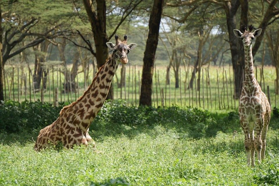 Visiter Crescent Island - Kenya