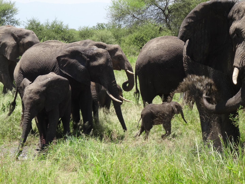 Visiter Le cratère du Ngorongoro - Tanzanie