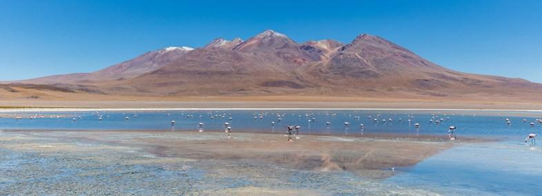 Circuit Pérou/Bolivie - Jour 13 : Laguna Colorada (4270 m) - Route des Joyaux - Aguaquiza (4000 m)