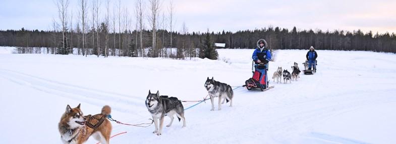 Circuit Laponie - Jour 3 : Journée en traîneau et visite du musée Same