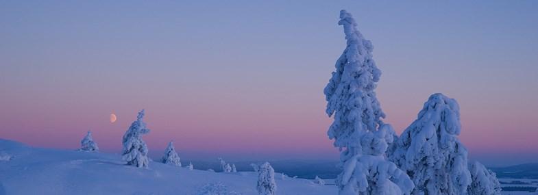 Circuit Laponie - Jour 6 : Elevage de rennes
