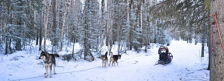 Circuit Laponie - Jours 3 et 4 : Raid en traîneau