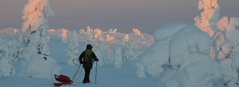 Circuit Laponie - Jour 5 : Randonnée en raquettes