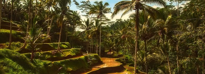 Circuit Indonesie - Jour 10 : Lovina - Munduk - Seminyak