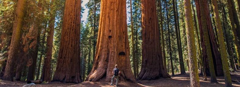 Circuit Etats-Unis - Jour 9 : Bakersfield - Sequoia - Modesto