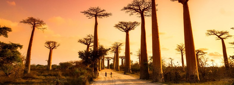 Baobabs Madagascar Circuit Dans En Bob Les NnO0m8yvwP