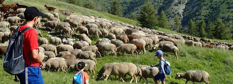 Circuit Rhône-Alpes - Jour 3 : La vie pastorale en montagne