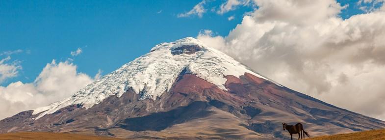 Circuit Equateur - Jour 8 : Machachi - Antisana - Tababela