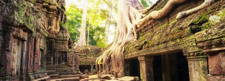 Circuit Cambodge - Jour 9 : Temples d'Angkor (Angkor Vat - Ta Prohm)