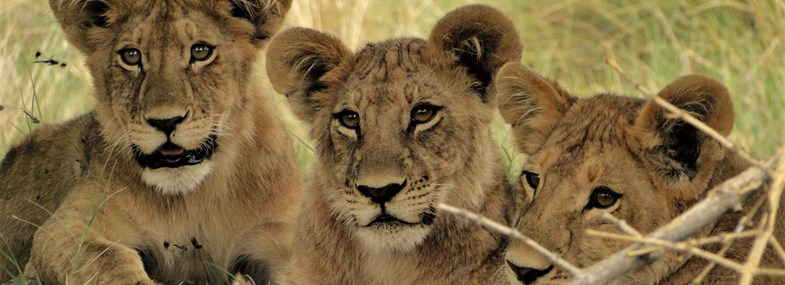 Circuit Namibie - Jour 3 : Windhoek - Parc national d'Etosha