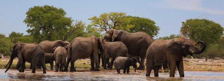 Circuit Namibie - Jour 5 : Parc Etosha - Kaokoland - Kamanjab