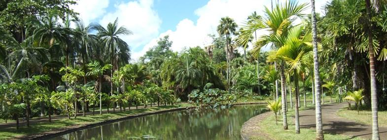 Circuit Ile Maurice - Jour 5 : Port Louis - Jardin des Pamplemousses