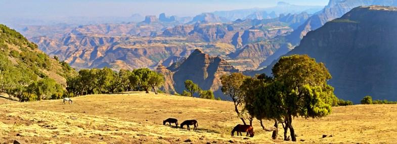 Circuit Ethiopie - Jour 5 : Parc du Simien (3260m) - Axoum (2130m)