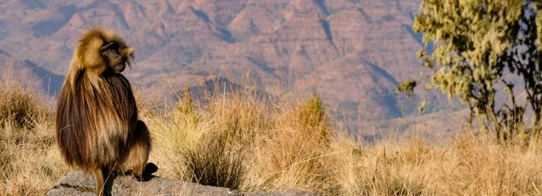 Circuit Ethiopie - Jour 4 : Gondar (2133 m) - Parc du Simien (3260 m)