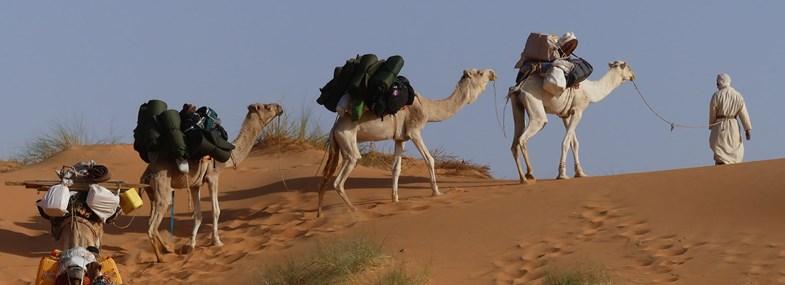 Circuit Mauritanie - Jour 4 : Chinguetti - Lagueila - M'ghalig Warane