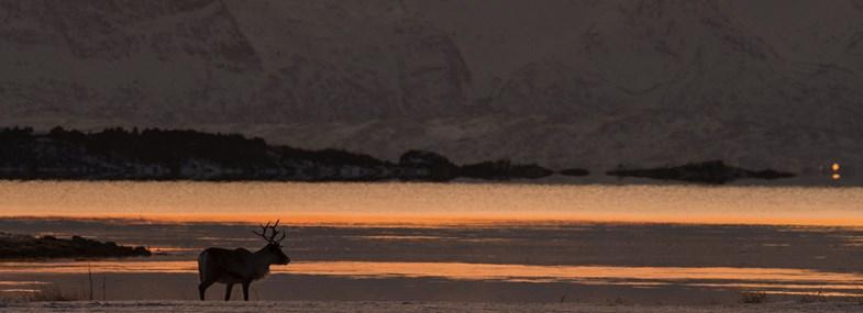 Circuit Norvège - Jour 4 : Randonnée raquettes dans la région de Tranøy