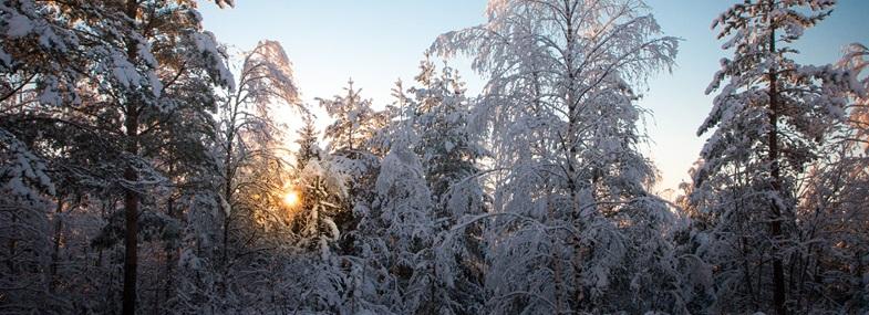 Circuit Laponie - Jour 2 : Lulea