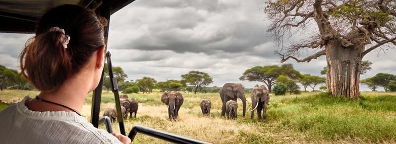 Circuit Kenya - Jour 2 : Nairobi - Masai Mara