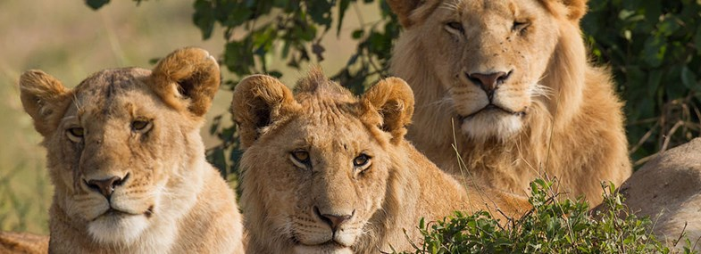 Circuit Kenya - Jours 3 & 4 : Masai Mara
