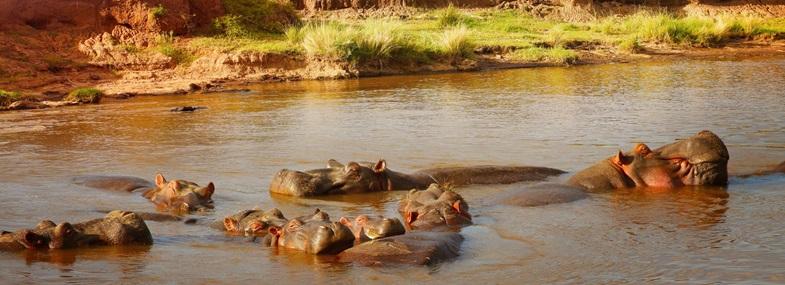 Circuit Kenya - Jour 5 : Masai Mara - Naivasha & Crescent Island - Nairobi