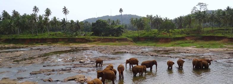 Circuit Sri Lanka - Jour 9 : Ella - Uda Walawe
