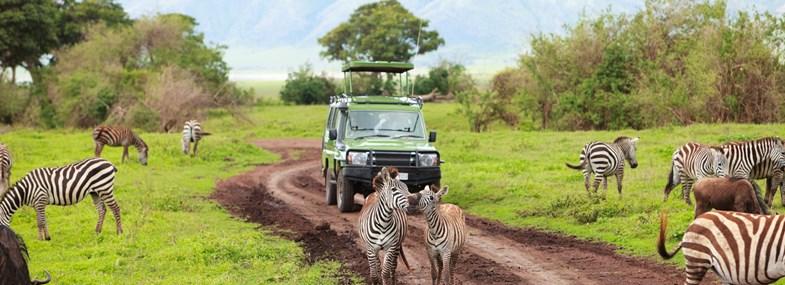 Circuit Tanzanie - Jour 3 : Arusha - Manyara - Karatu