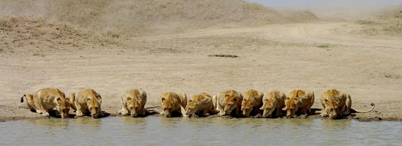 Circuit Tanzanie - Jour 5 : Natron - Serengeti