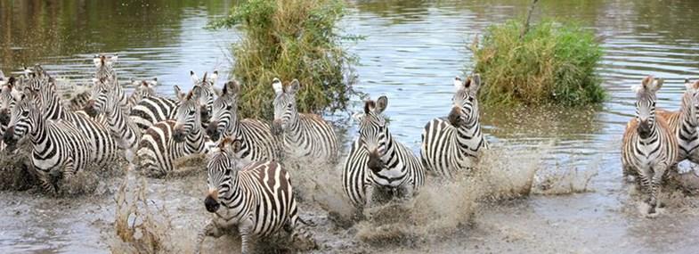 Circuit Tanzanie - Jour 6 : Serengeti - Ndutu