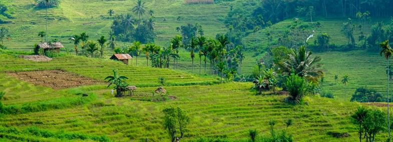 Circuit Sri Lanka - Jour 5 : Mont Knuckles - Kandy